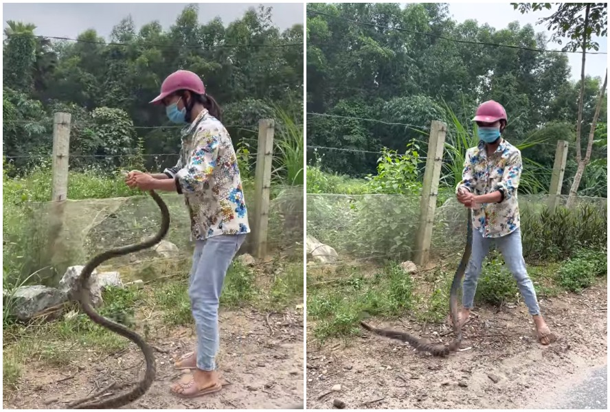 catching a huge snake